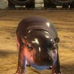 gw2-mini-hippo-calf
